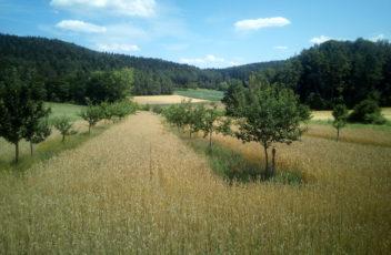 vielfältige Agroforstwirtschaft